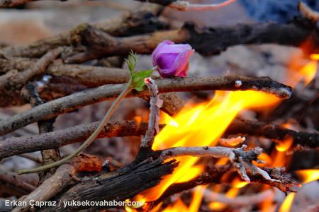Ateşe atılan lale 1