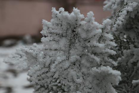 Diyarbakır'da dondurucu soğuğun güzelliği 1