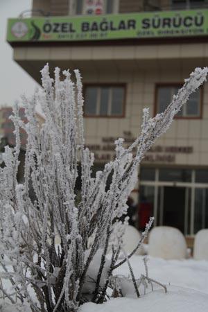 Diyarbakır'da dondurucu soğuğun güzelliği 3