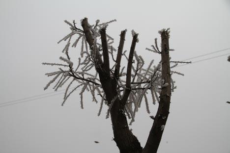 Diyarbakır'da dondurucu soğuğun güzelliği 9