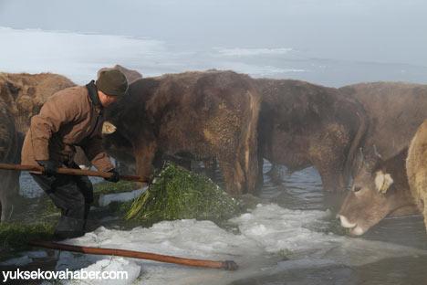 Buz kırıp hayvanlarını besliyorlar 11