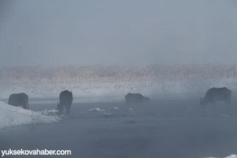 Buz kırıp hayvanlarını besliyorlar 4