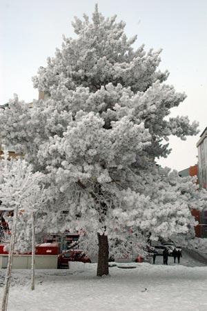 Erzurum'dan kar manzaraları 2