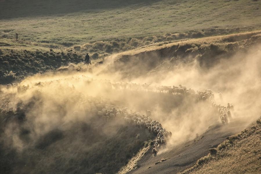 Sürülerin, Nemrut Dağı'na tozlu yolculuğu 1