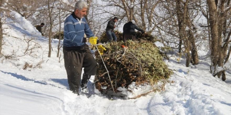 Hayvanları için dondurucu soğukta karlı tepelerden ot taşıyorlar