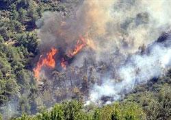 Ergani'de Orman Yangını