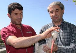 Iğdır'da Yaralı Bulunan Leylek Tedavi Altına Alındı