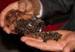 Şaşırtan Arı Ölümleri Masaya Yatırıldı