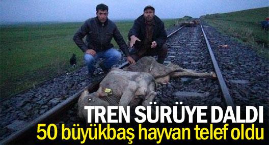 Tren sürüye daldı: 50 büyükbaş hayvan telef oldu