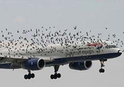 Yolcu Uçağı Kuş Sürüsüne Çarptı