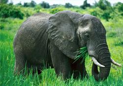 Çiftçilerin Fillerle İmtihanı