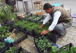 Adilcevaz'da Sebze Fidesi Satışları Başladı