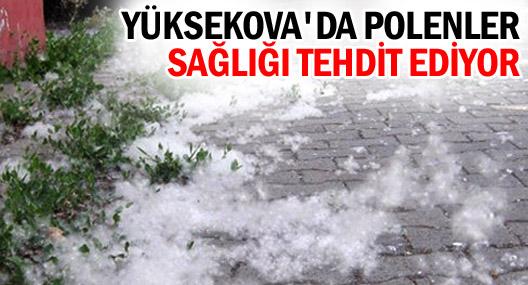 Yüksekova'da polen hayatı olumsuz etkiliyor