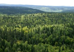 'Zagros ormanları korunmalı'