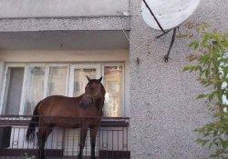 Ödünç Atı Çalınmasın Diye Balkonda Tuttu