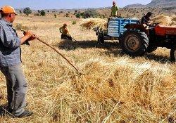 Gercüş'te Buğday Hasadı Buruk Başladı