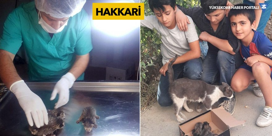 Göbek bağları yapışık olan yavru kediler kurtarıldı