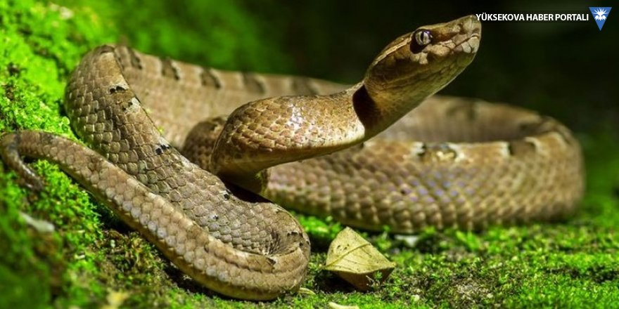Dünya Sağlık Örgütü: Her yıl 5.4 milyon kişiyi yılan ısırıyor
