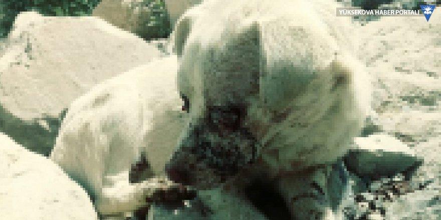 Hakkari Valiliği'nden gözleri oyulan köpekle ilgili açıklama