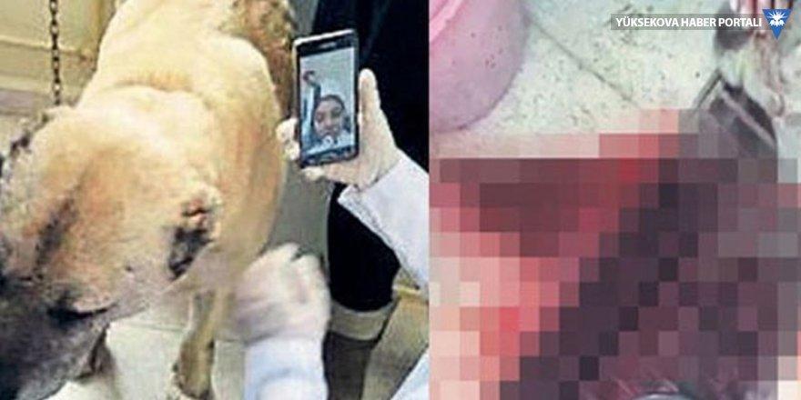 Üniversitenin anatomi dersinde sokak köpeğinin boğazı kesildi