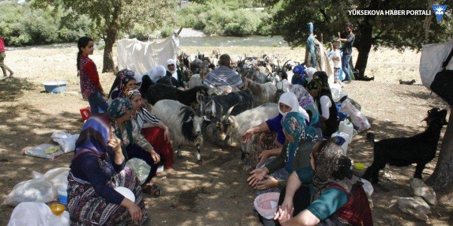 Bin yıllık çoban geleneği yaşatılıyor
