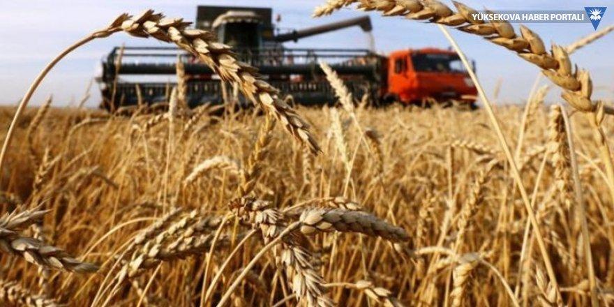 Buğday ihracatçılarının stokları eriyor