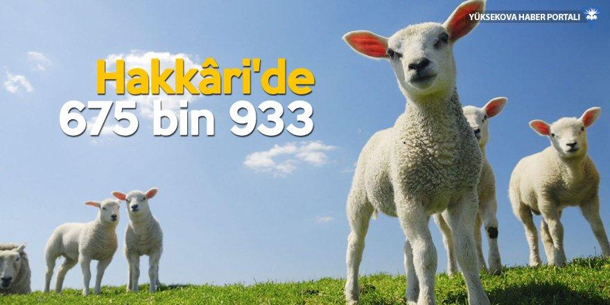 Van, koyun sayısıyla Türkiye lideri