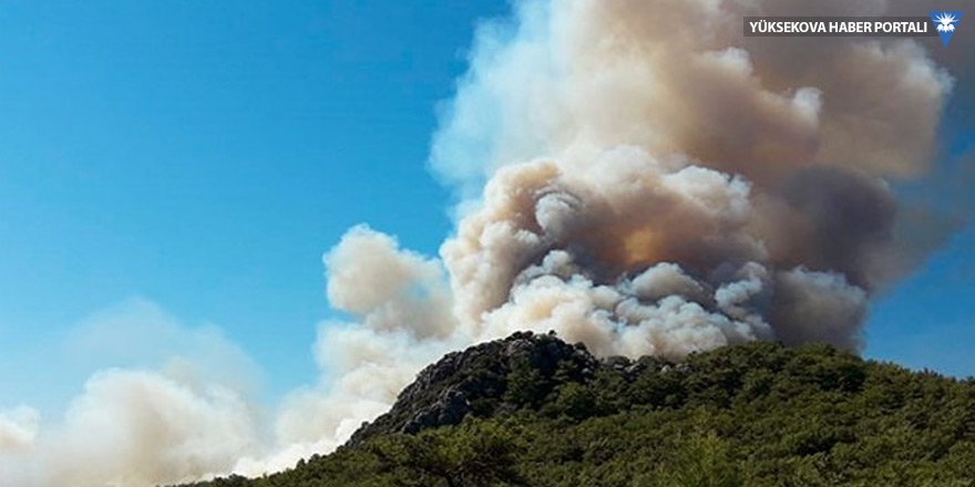 Antalya'da orman yangını: Seralar tehdit altında