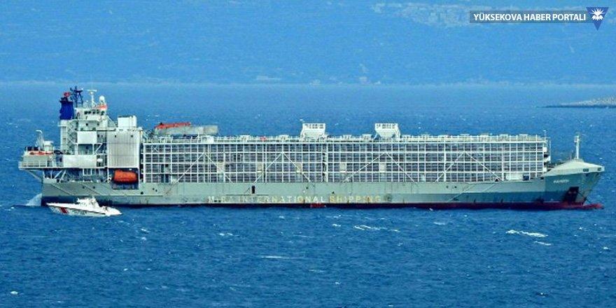 Gemideki hayvanlar Bandırma'ya boşaltılmış