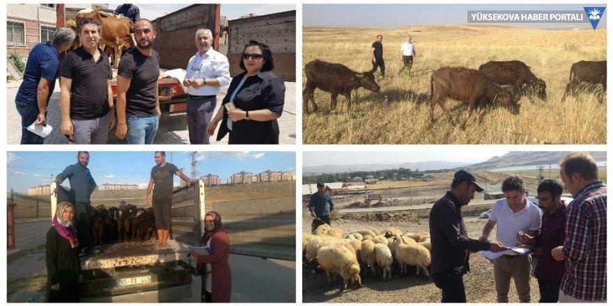 Van'da 2 bin 832 baş hayvan dağıtıldı