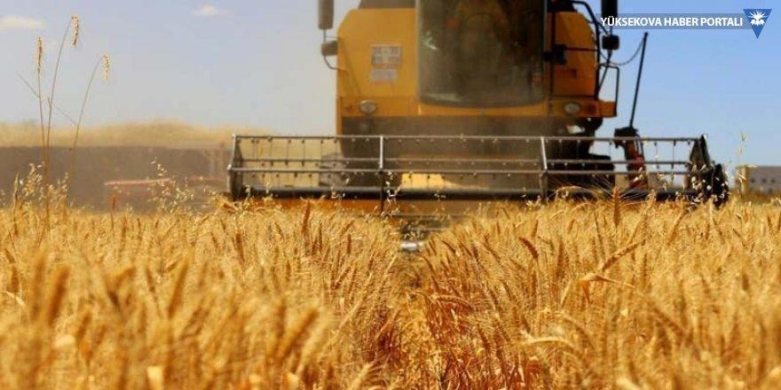 TMO: 250 bin ton buğday ithal edeceğiz