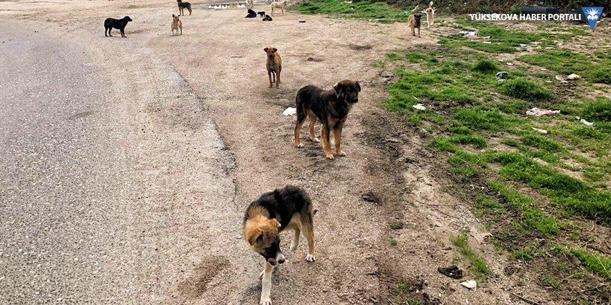 Yüksekova'daki başıboş köpekler tehlike saçıyor