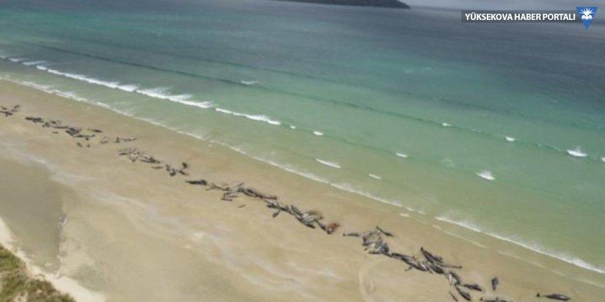 Yeni Zelanda'da sahile vuran 150'ye yakın balina öldü