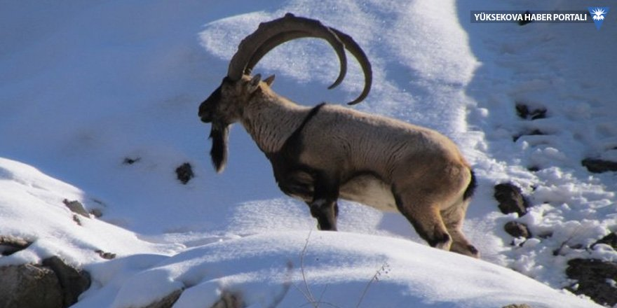 Dersim'de 'avcılığa hayır' diyen doğa savunucularına gözaltı