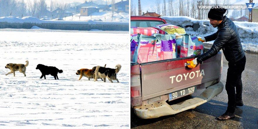 Yüksekova'da sokak ve yaban hayvanları için yem bırakıldı