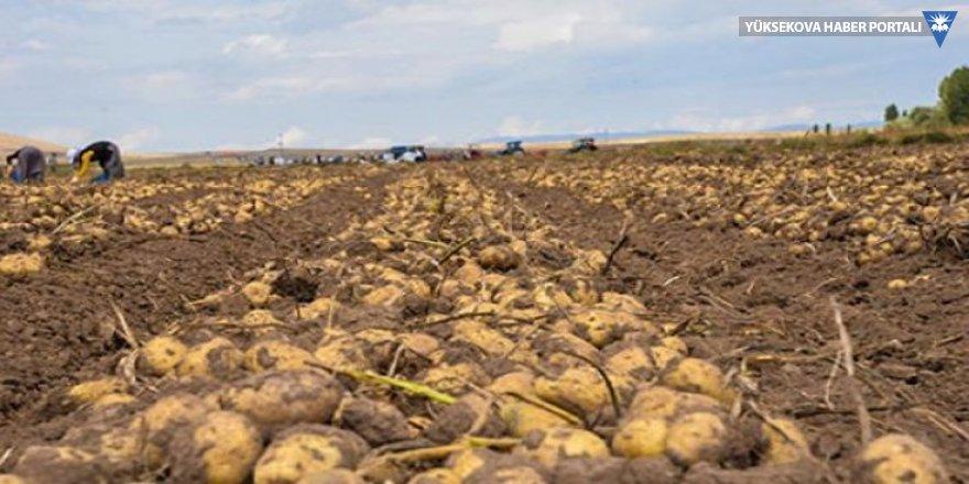 200 bin ton patates ithal ediliyor