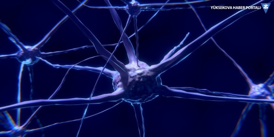 Ölmüş beyin canlandırıldı