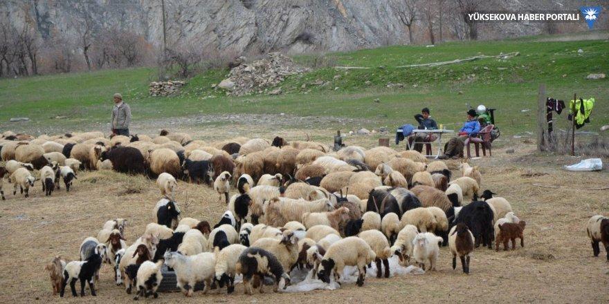 Hakkari: Ot ve saman stokları tükenen köylüler hayvanlarının derdine düştü