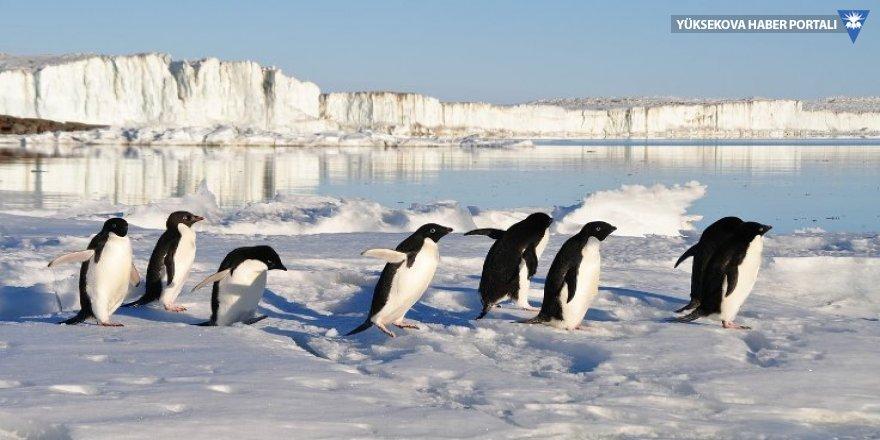 Binlerce yavru penguen boğularak öldü
