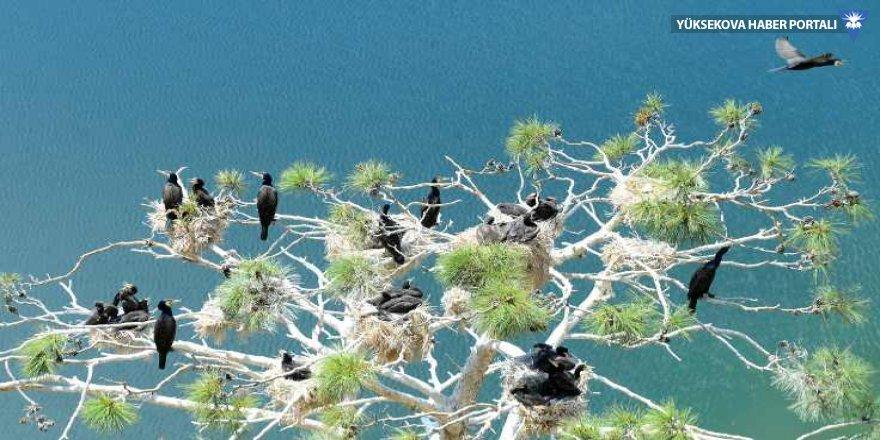 'Saklı cennet'te rekor sayıda kuş