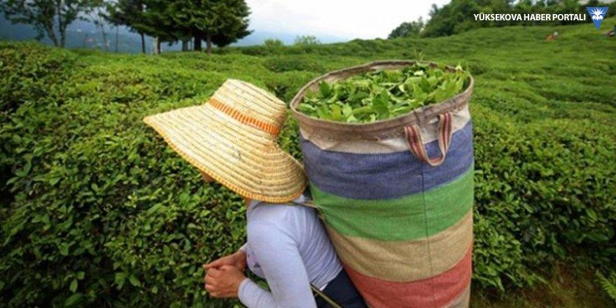 Pakdemirli, yaş çay alım fiyatını açıkladı