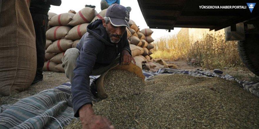 Suriyeli Kürtler: Şam'a buğday satışı fiilen yasak