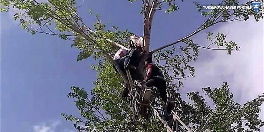Van'da budadığı ağaçta mahsur kalan kişiyi itfaiye kurtardı
