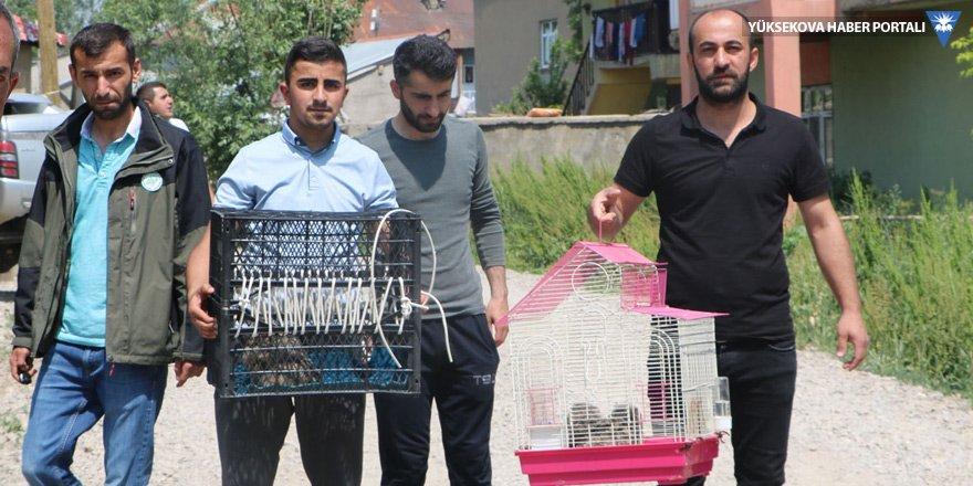 Yüksekova: Yuvasından düşen yavru baykuşlara sahip çıktı