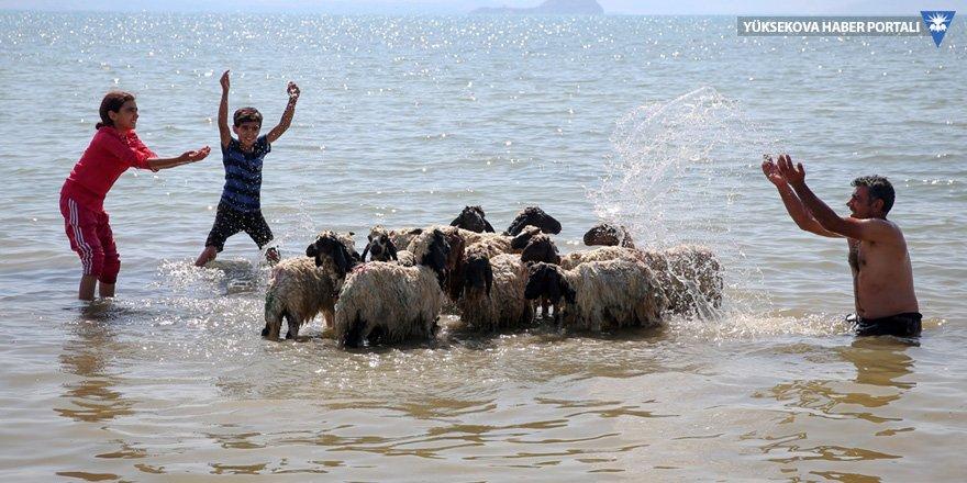 Çocukları ve kuzularıyla Van Gölü'nde serinledi