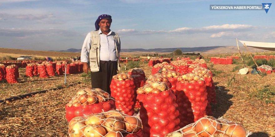 Soğan üreticisi: Külli zarar ediyoruz
