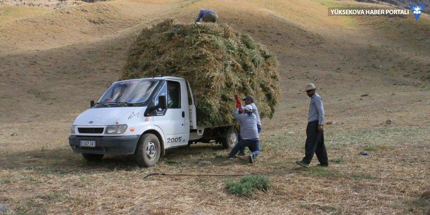 Hakkari: Yaylalarda biçilen otlar köylere taşınıyor