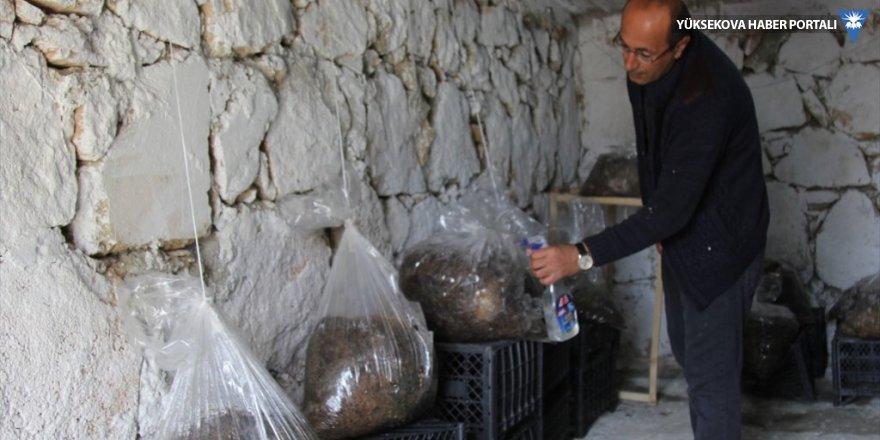 Evinin bodrumunda mantar üretiyor