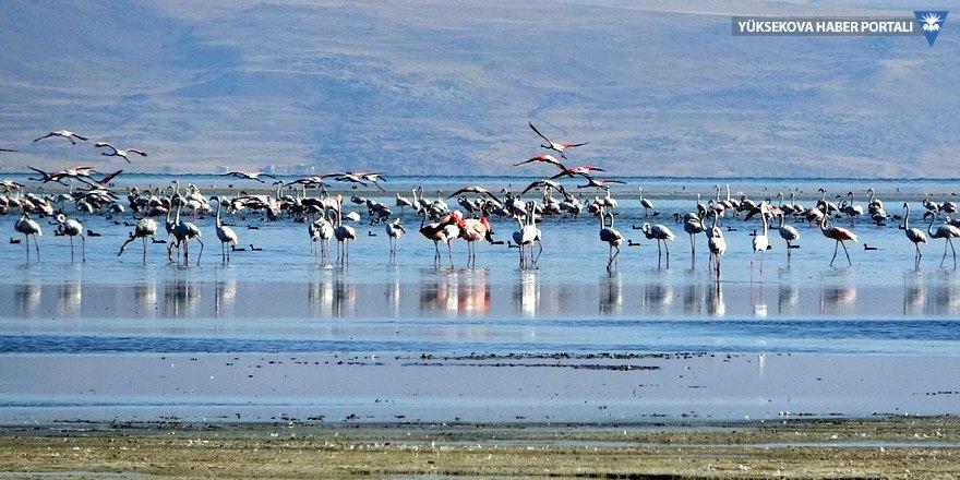 Van Gölü'ndeki flamingoların Afrika göçü başladı