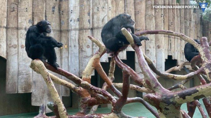 Almanya'da hayvanat bahçesi yandı: 30 hayvan öldü